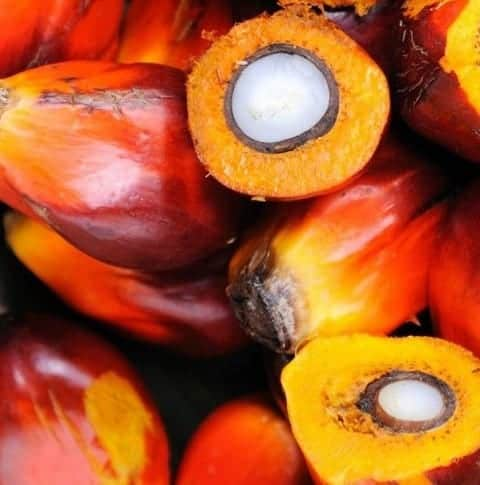 Oil palm fruits with some cut open to show the palm kernel