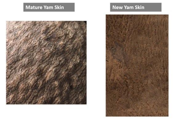 Mature yam skin and new yam skin